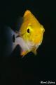 Tiny yellow submarine