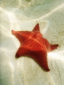 Sandy Bay, Roatan Honduras, beautiful spot for starfish!
