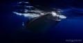 Whale Shark Feeding Isla Mujeres, Mexico Canon 5D3