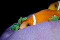 Nemo Found!