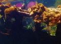 Sunken ship off the coast of Roatan