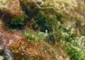 Shrimp Sliema Malta