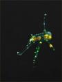 almost transparent - juv Ghostpipefish