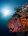 Pretty reef  nice sunburst. Enough said
