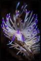 UW flower