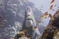 hammerhead  or bumphead  parrotfish caught by surprise...  NEX 7  Nauticam Housing 18 35