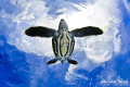 This image of a baby Leatherback Turtle was taken in the clear blue water of the Bahamas.