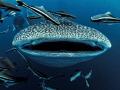 Smile ...   Whale Shark   Rhincodon typus. Sail Rock  Thailand  G10 iso100 f3.2 1/60