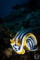 Kowtow