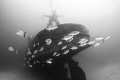 Abandoned Ship   EX USS Kittiwake Grand Cayman