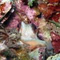 octopus in the den