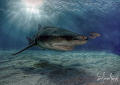 Fun with HDR and Lemon Shark basking with friends in the sunset at Tiger Beach Bahamas