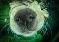 ..just for laughs, my aqua-phobic puppy.