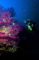 My body Sylvain at 55 meters depth  the famous Wreck of TOGO  south of France  CAVALAIRE  near TOULON.