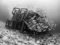 Resistance is futile ... Russell's Snapper - Lutjanus russellii. Sail Rock, Thailand-EM5-Panasonic 8mm-iso400-f3.5-1/125