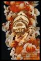 whipcoral shrimp