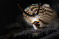Dotto Sp, Found them in Bali, needs to wait for them to start walking and snap this pic. Nice little soft lighting kind of isolate them from the background because the body of dotto emits light very well. Taken at Seraya beach Bali with Nikon D4