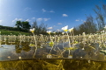 aquatic spring field