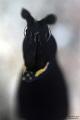 Black Ribbon Eel Portrait