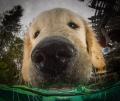 wet puppy kisses, our alarm clock