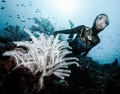 Ai and the Crinoid  Ai Futaki  Guinness World Records for  The Longest Distance swam in cave with one breath  with fins for 100m as first woman in the world  and without fins for 90m as first HUMAN in the world