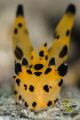 P I K A C H U 