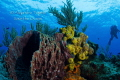 Reef with Diver  Cozumel  Mexico
