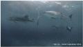 Whaleshark Soup (Compact Camera S95)