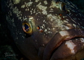 look into my eyes....... big grouper coming near