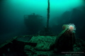 Parat and Ferndale wreck from WW2 sunk at the same day, it is taken on 50 meter with a tripode