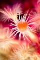 Dream sea flower (No PS)
