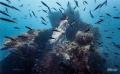 Underwater shooting on Uss. Liberty Wreck Dive, Tulamben. Bali