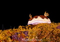 Nudibranch catwalk