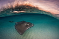 Stingray Sunrise