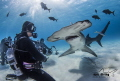 Staredown with a Great Hammerhead