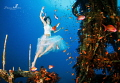 Dancing with the fishes