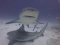 Close encounter  Bull sharks of Playa del Carmen  Mexico