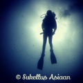 Morning dive at Victor s wall in Alcoy  Cebu. Edited photo