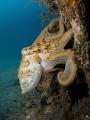 Octopus on a pillar