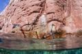 Sea Lion in the Rock, La Paz Mexico