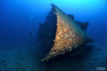 Isonzo wreck    Ship sunken the 10 april 1943 torpedoed by the british submarine Safari. It s lying on a sand bottom at 56 meters depth.