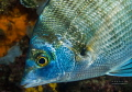 shiny....