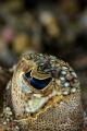 b  Flounder s eye.  /b