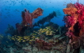 Exploratory diving Indonesia