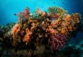exploratory diving   Indonesia