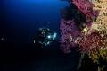 Deep Model in a wall with red gorgonia in Trogir croatia