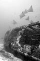 Mexico - Isla Mujeres - Canonero 55 Wreck