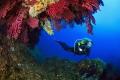Diving between big gorgonians of Medees islands