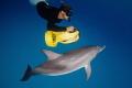 'Fun in the sea',  Dolphin, Bahamas — Subal underwater housing, Canon 5D mk2, Canon EF8-15 @ 15mm, f8, 1/160s, ISO400, Inon Z240 strobe