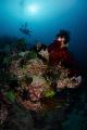A L I V E Coral reef   Diver Puerto Galera  Philippines. October 2014